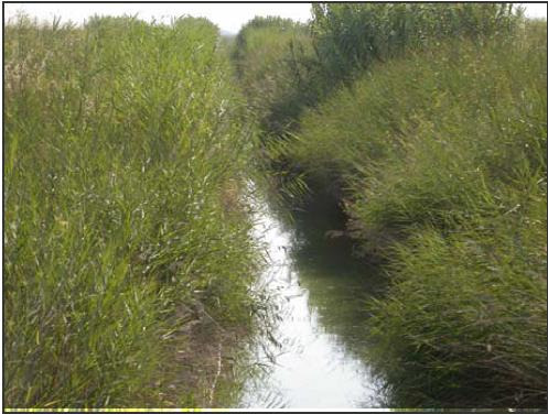 Overgrown ditches like this provide good shelter and nesting cover for hazardous birds